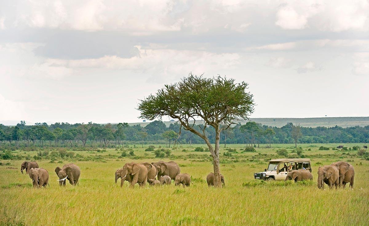 Gorilla Trekking & Masai Mara Safari