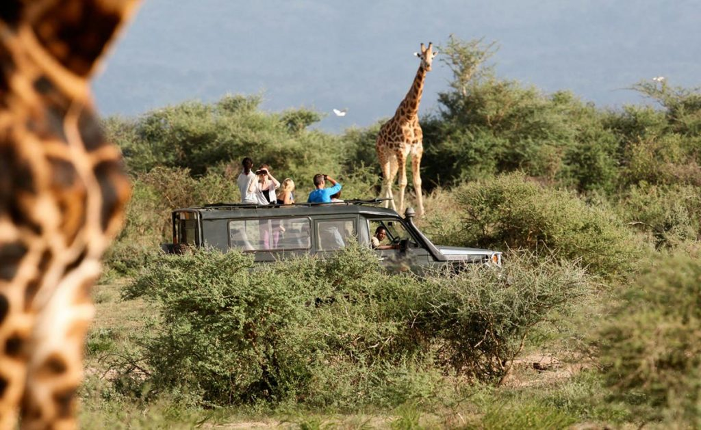 Wildlife Game Viewing in Uganda